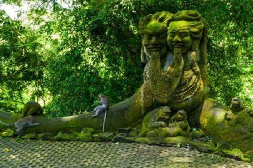 پارک جنگلی میمون ها