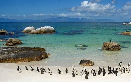 آفریقای جنوبی دنیای شگفت انگیز در یک کشور ! 3