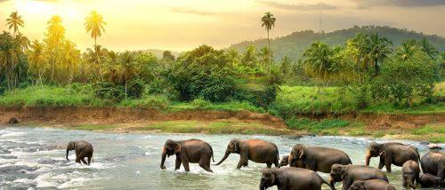 سریلانکا و راهنمای سفر - 2
