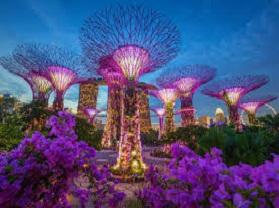 تورمالزی و سنگاپور نوروز